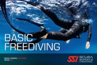 Diving madeira Snorkeling whales dolphins Kayak - 6336422_orig-e1484139291531