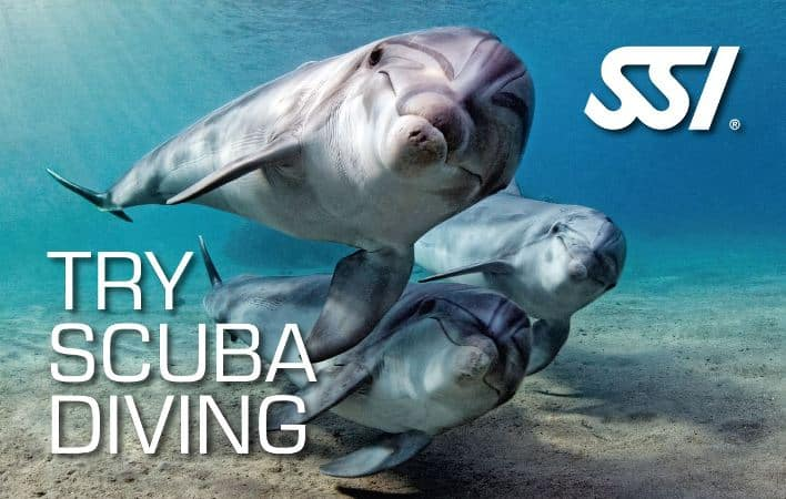 Diving madeira Snorkeling whales dolphins Kayak - SSI-Try-Scuba-Diving-1