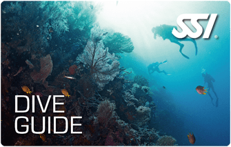 ssi dive guide course madeira