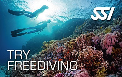 Diving madeira Snorkeling whales dolphins Kayak - tfd