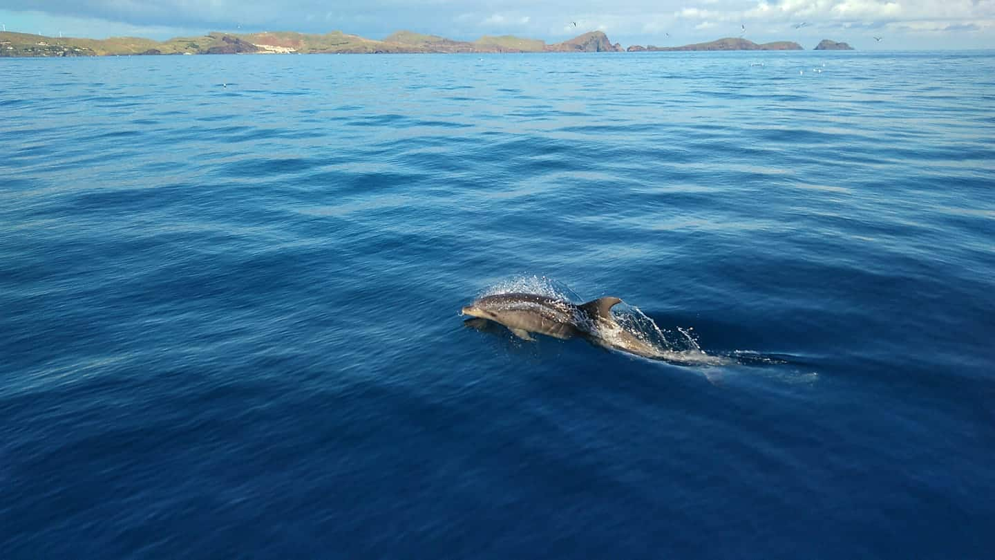 Diving madeira Snorkeling whales dolphins Kayak - 27913413_1598945963520571_1585407094614608600_o