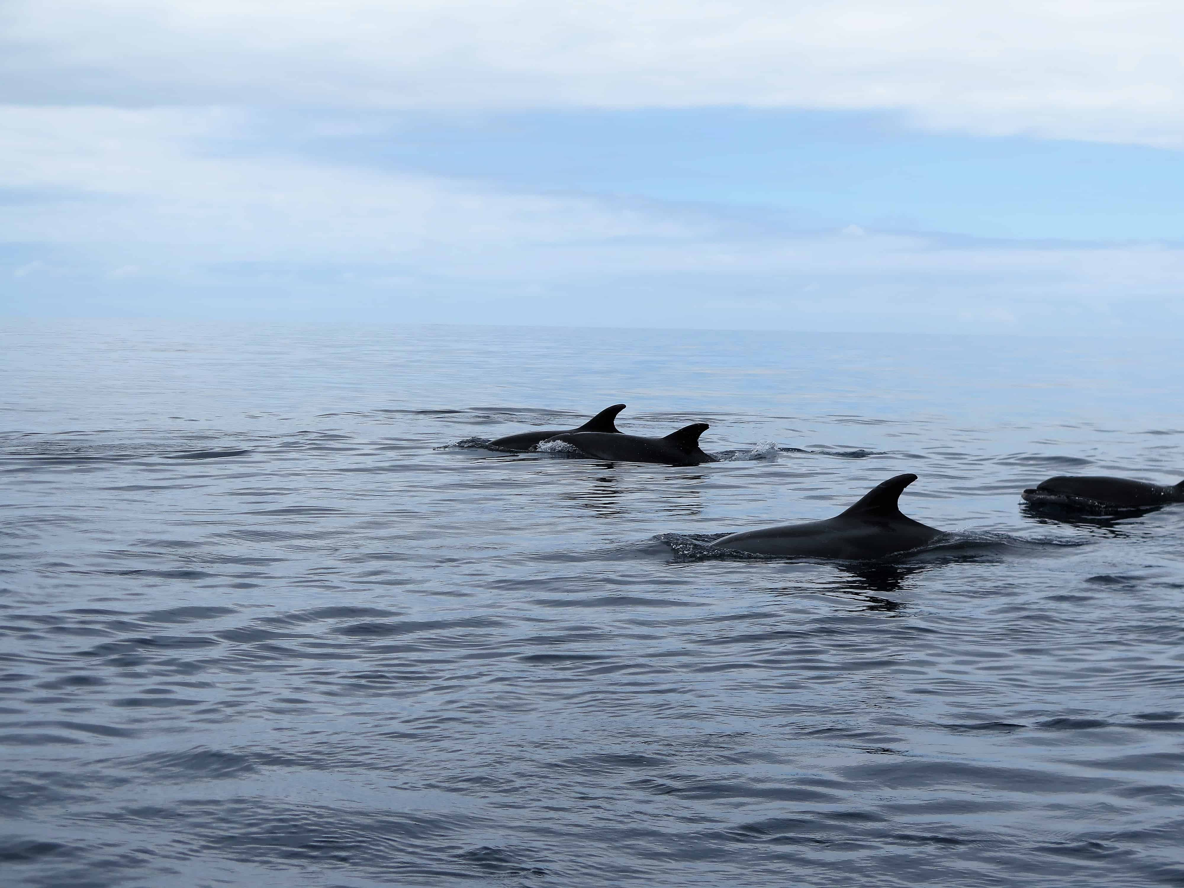 Diving madeira Snorkeling whales dolphins Kayak - img_1070