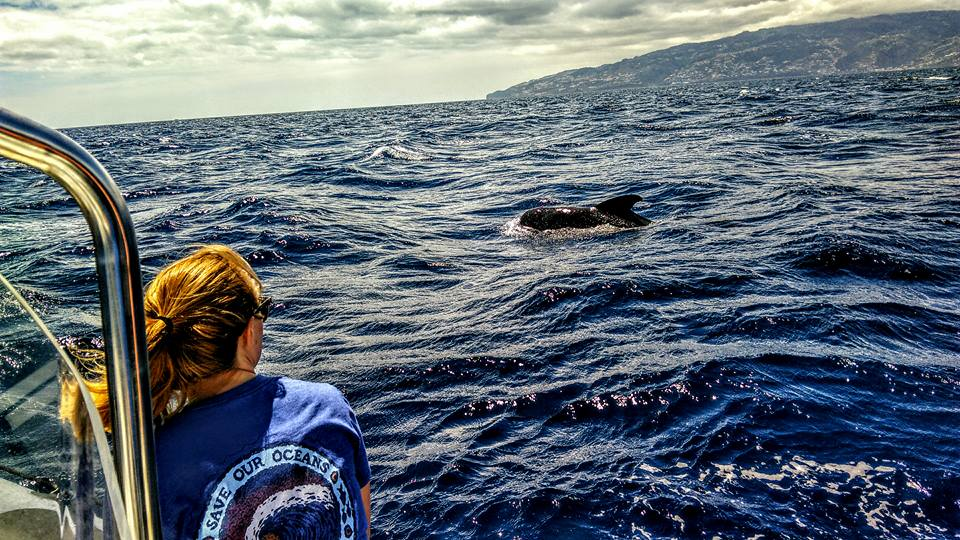 Diving madeira Snorkeling whales dolphins Kayak - dolphins-madeira