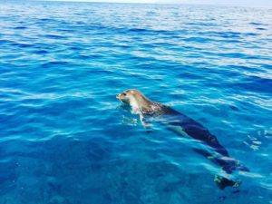 Diving madeira Snorkeling whales dolphins Kayak - 45289448_1059504814230143_6343130881841954816_n-300x225
