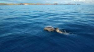 Diving madeira Snorkeling whales dolphins Kayak - 27908157_1597699940311840_8836331261525920891_o