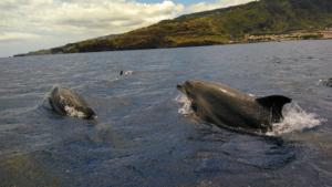 Diving madeira Snorkeling whales dolphins Kayak - 33923501_1711827988899034_8978764861844488192_n