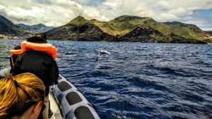 Diving madeira Snorkeling whales dolphins Kayak - dolphin-madeira
