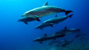 Diving madeira Snorkeling whales dolphins Kayak - p03hdj0p