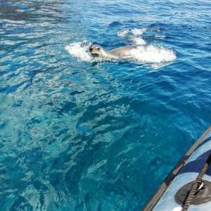 Diving madeira Snorkeling whales dolphins Kayak - 37696334_987398821440743_760388676600463360_n